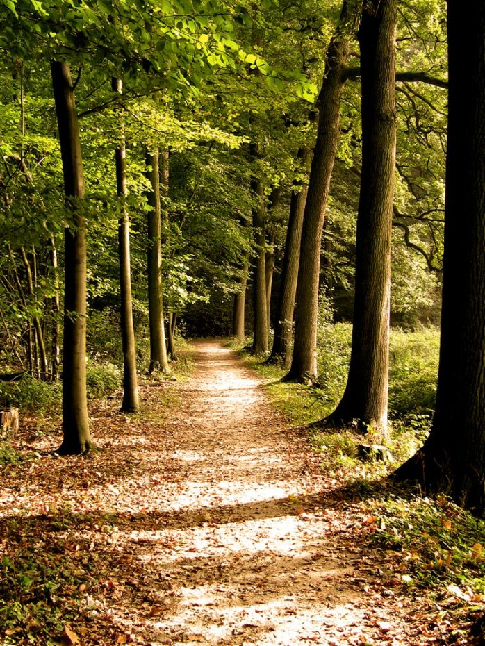 forest-path-1387064