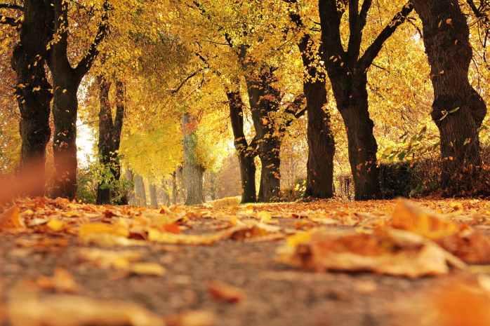 alley autumn autumn colours autumn leaves